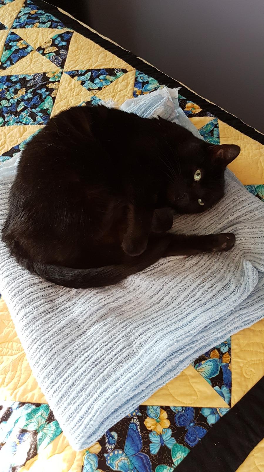 Sasha curled up on a blanket
