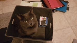 My cat Merlin helping me sort papers